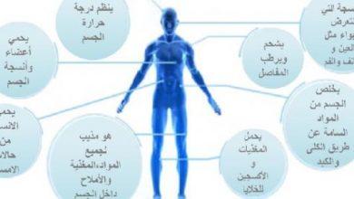 Photo of فوائد الماء لجسم الإنسان