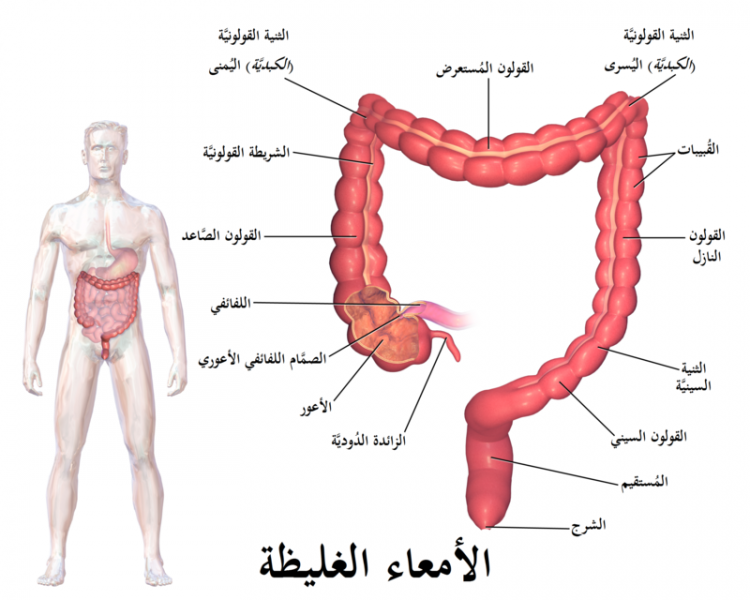 Photo of اعراض الزائدة الدودية عند النساء