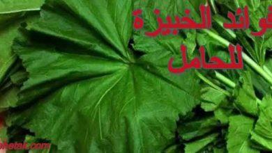 Photo of فوائد الخبيزة للحامل