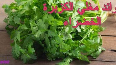 Photo of فوائد مغلي الكزبرة الخضراء