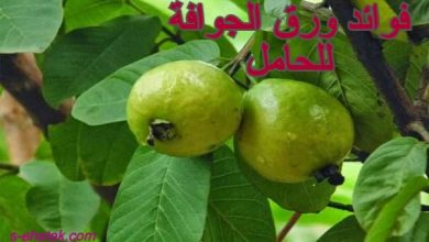 Photo of فوائد ورق الجوافة للحامل