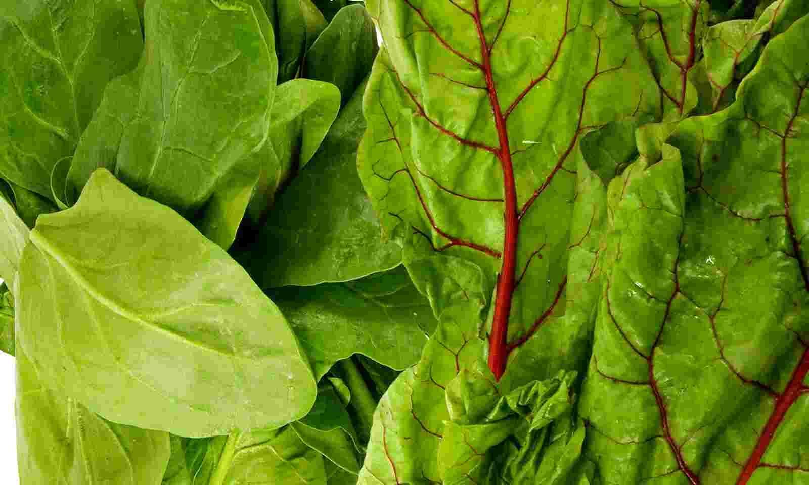 انواع الخضروات الورقية واسمائها